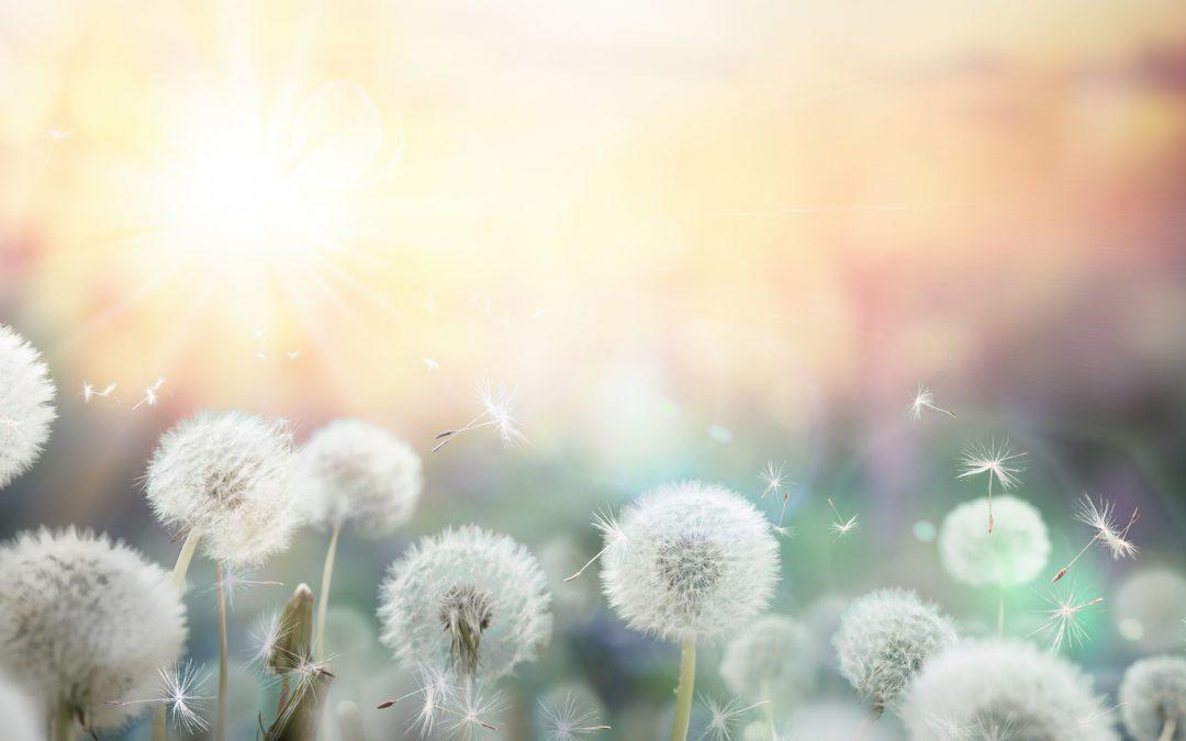 Hypnose bei Pollenallergie
